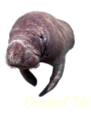 Manatee is an Endantered Species